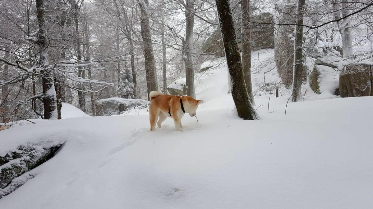 Wälder und Ruinen Wanderung von Sparneck zur Burgruine Epprechtstein