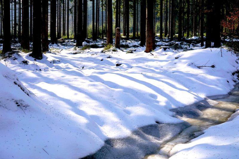 Die Wälder zwischen Vordorfer Mühle und Schneeberg