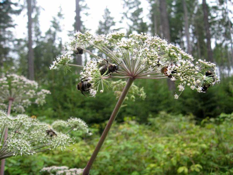 Insekten suchen Nahrung