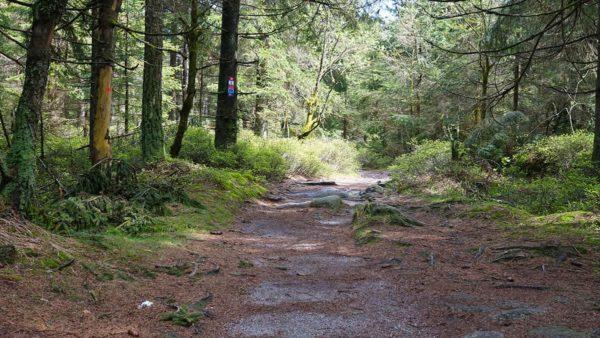 Der Wald in der Nähe des Nusshardt im Fichtelgebirge