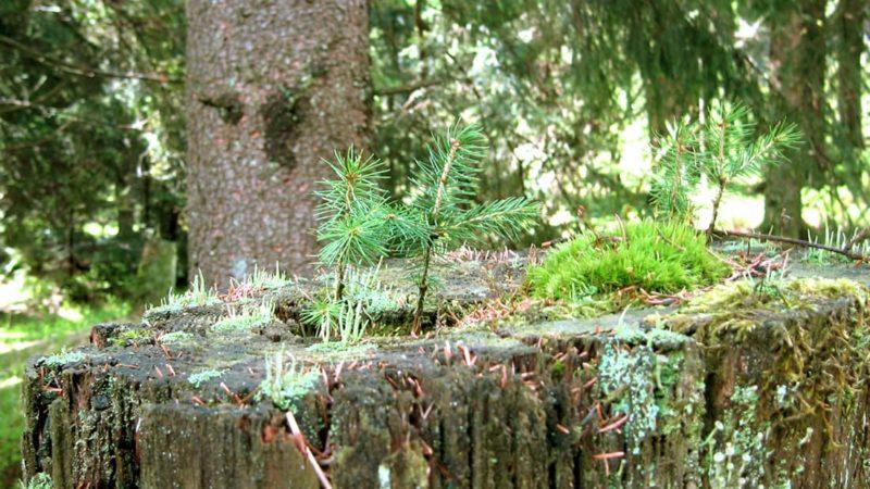 Mikro Vegetation
