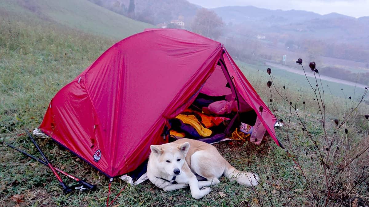 Mit Hund und Zelt auf dem Franziskusweg